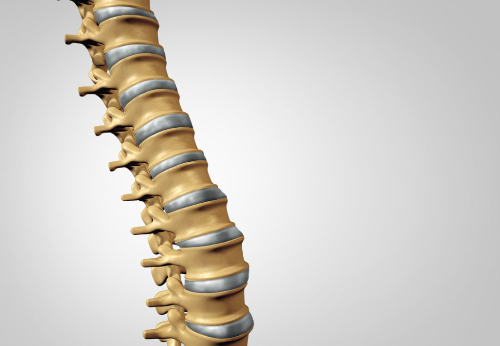 Spine diagnostic human spinal system concept as medical health care anatomy symbol with the skeletal bone structure and  intervertebral discs closeup with copy space.